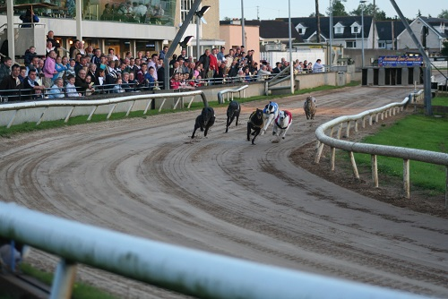 Night At The Dogs